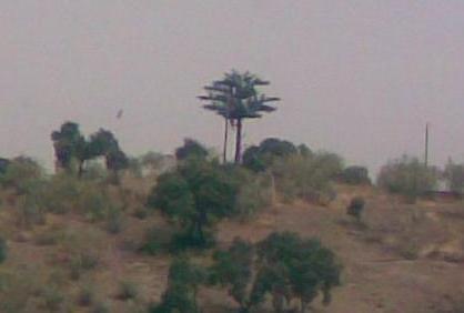20081117153056-antena-arbol.jpg